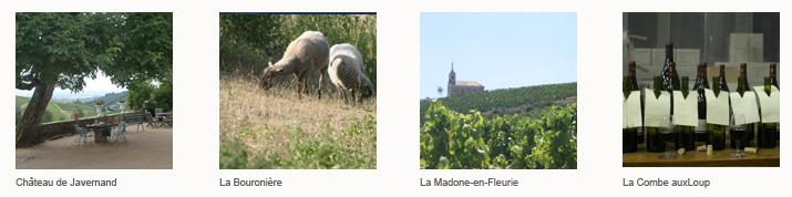 De Romanèche à Chiroubles <!  :fr  >B   De Romanèche Thorins à Chiroubles<!  :  ><!  :en  >B   From Romanèche Thorins to Chiroubles<!  :  >