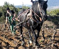 labour cheval 003